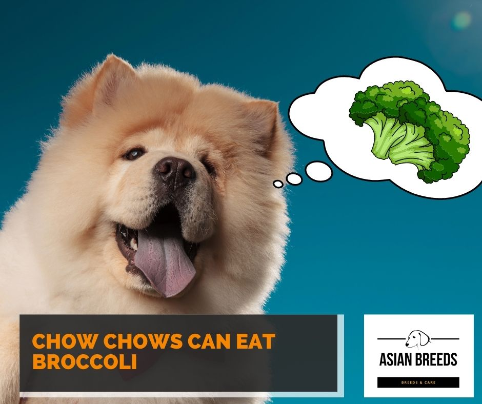Chow chows can eat broccoli