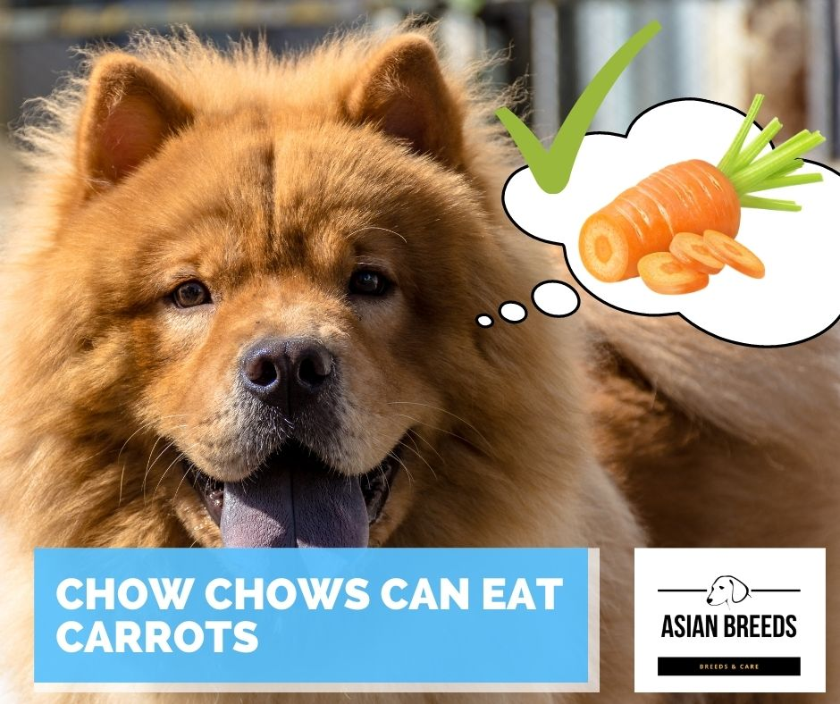 Chow chows can eat carrots