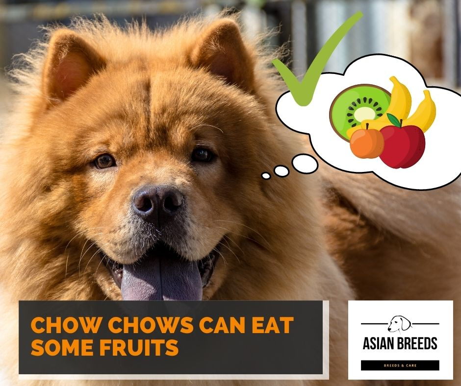 Chow chows can eat some fruits